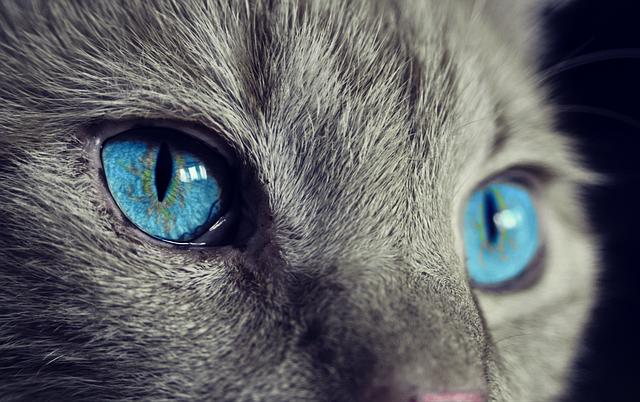 Vivre avec un chat en appartement : règles de cohabitation